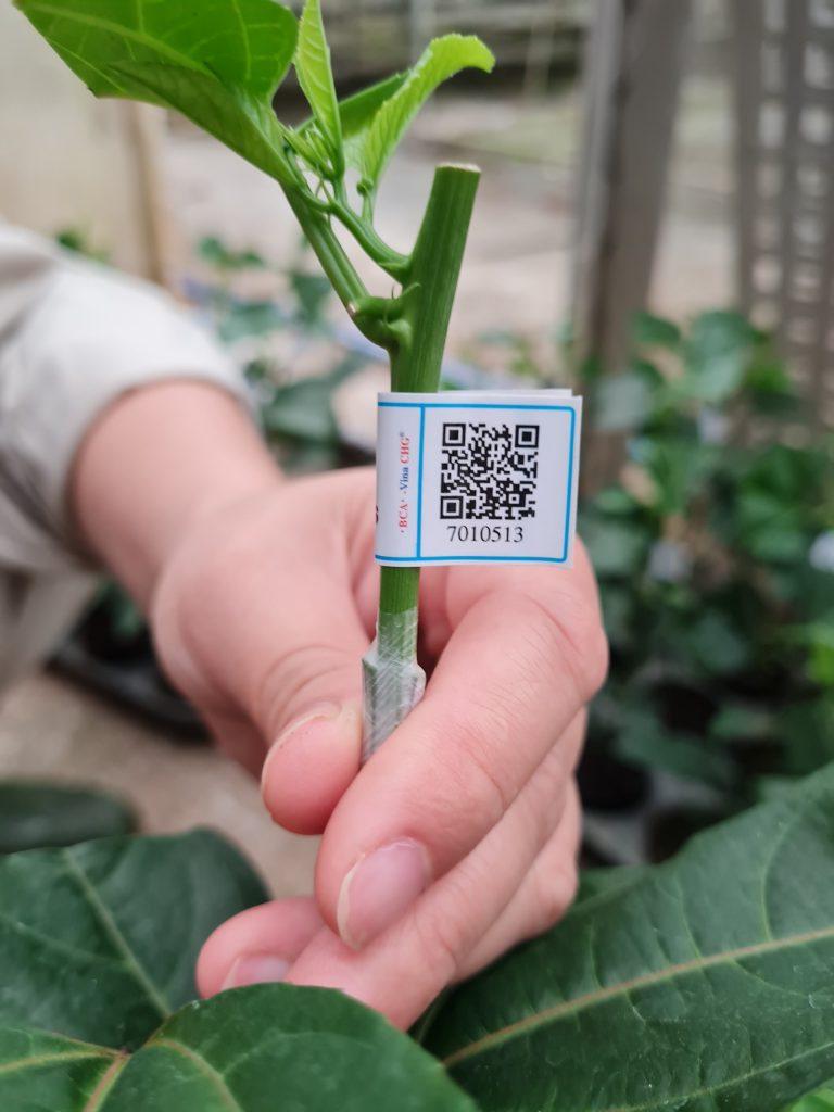 Chi tiết tem truy xuất nguồn gốc trên từng cây giống chanh leo Nafoods